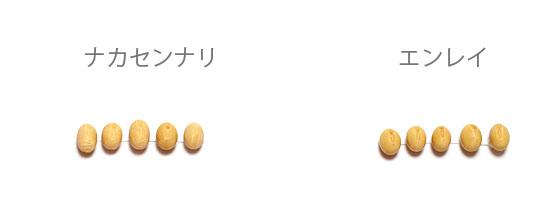 2-daizu