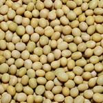 大豆の豆知識