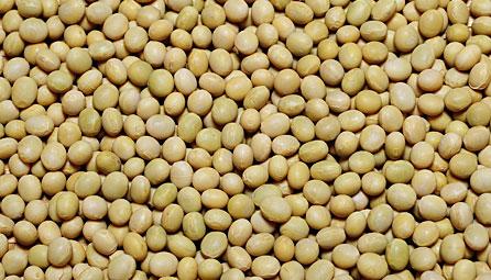 大豆の品種